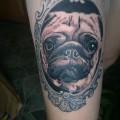 Harry the Pug - IG @harrythedowniepug