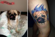 Pug Tattoo Story – Muffin, Our Hero