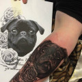 Forearm Pug Tattoo by Bodo Buntmacher