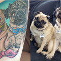 Thigh Pug Tattoo by Kevin Reid of Aberdeen Tattoo Collective