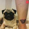 Leg Pug Tattoo on Ana Laura Villega