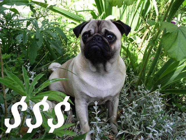 pug-cost-main-01
