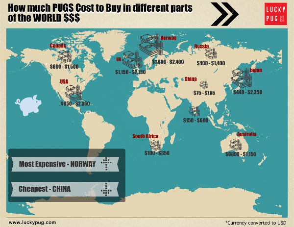 pug cost worldwide infographic