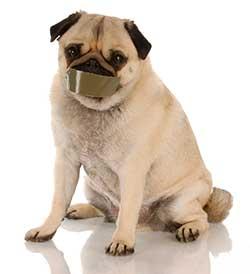stop-pug-bark