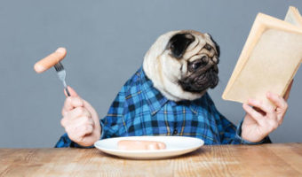 Pug Eating Food and Reading