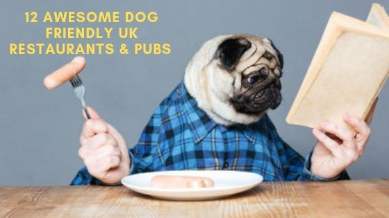 12 Awesome Dog Friendly Restaurants & Pubs in the UK