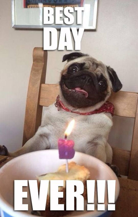 pug-meme-best-day-ever