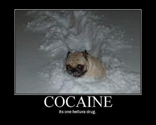 pug-meme-cocaine-helluva-drug