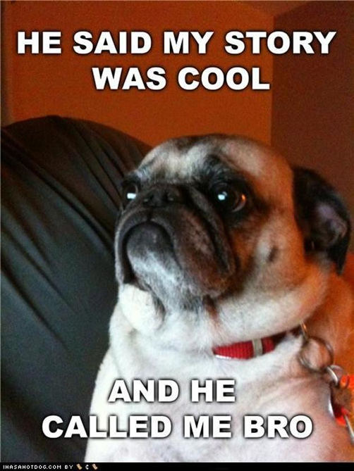 pug-meme-cool-story-bro