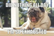 50 Funny Pug Memes – Best Funny Pug Pictures