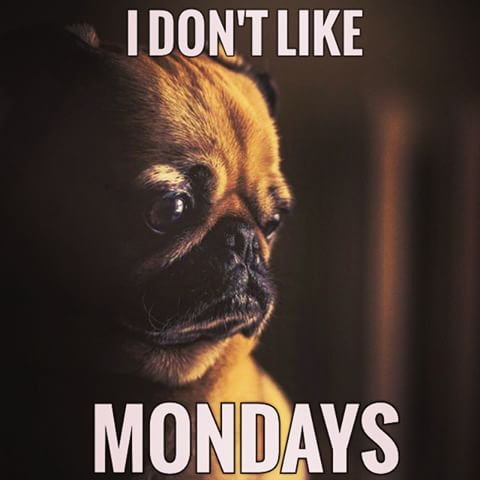 pug-meme-dont-like-mondays