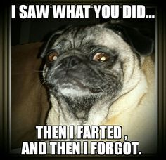 pug-meme-farted-andforgot