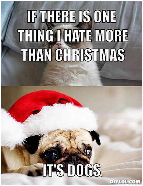 pug-meme-grumpy-cat-hate-dogs