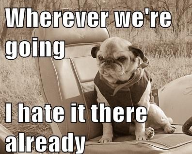 pug-meme-grumpy-pug