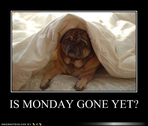 pug-meme-monday-gone-yet