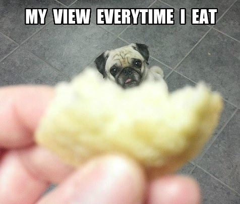 pug-meme-my-view-everytime-i-eat