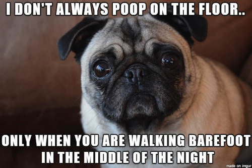 pug-meme-poo-when-walking-barefoot-in-the-middle-of-night