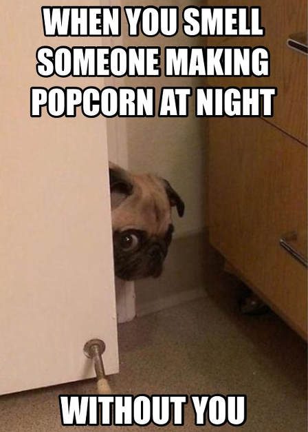 pug-meme-popcorn-at-night