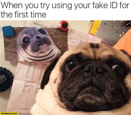 pug-meme-pug-seal-fake-id