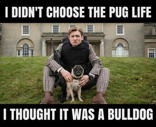 pug-meme-thought-it-was-a-bulldog
