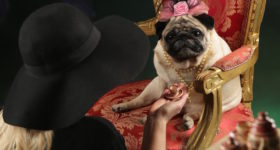 royal family pugs