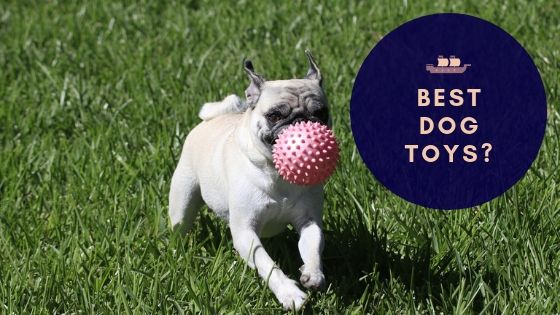 The 12 Best Puppy & Dog Toys Your Dog Needs to Try