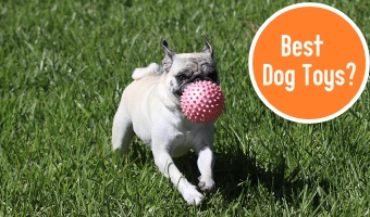 Best Dog Toys 2019 Cover