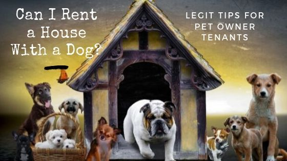Can I Rent a House With a Dog? Legit Tips for Pet Owner Tenants