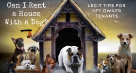 rent with a dog guide