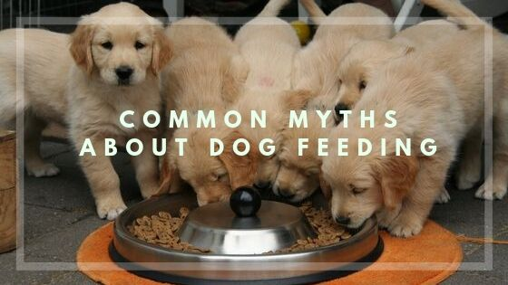 Common Myths about Dog Feeding