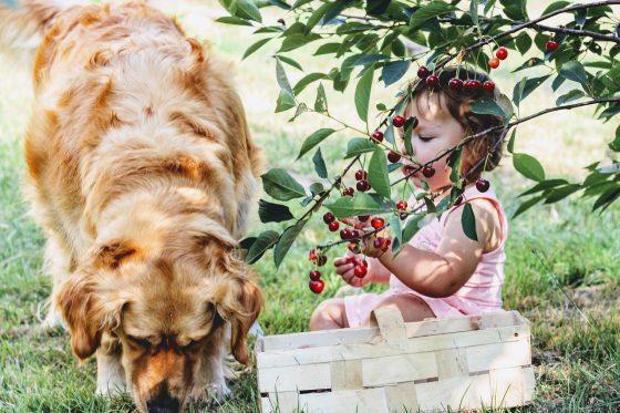 dog and girl eating fruit