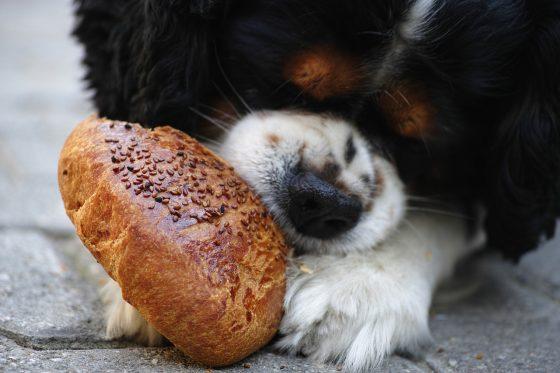 dog eating leftover