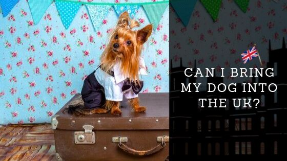 Travelling With Dogs – Can I Bring My Dog Into the UK?