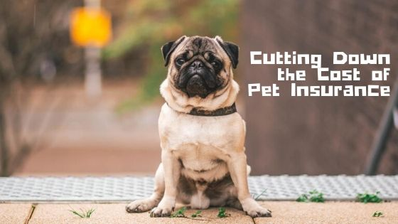 Cutting Down the Cost of Pet Insurance
