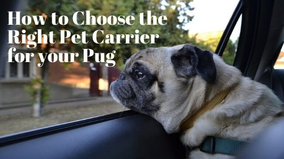 How to Choose the Right Pet Carrier for your Pug