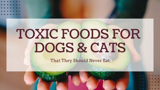 Toxic foods that Dogs and Cats should Never Eat