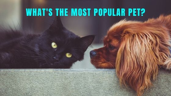 What's the Most Popular Pet in the US? – Pet Statistics
