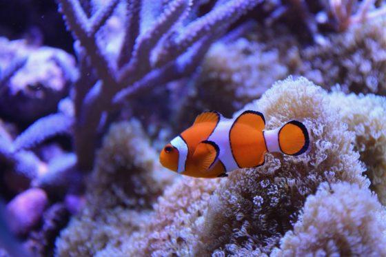 pet saltwater fish