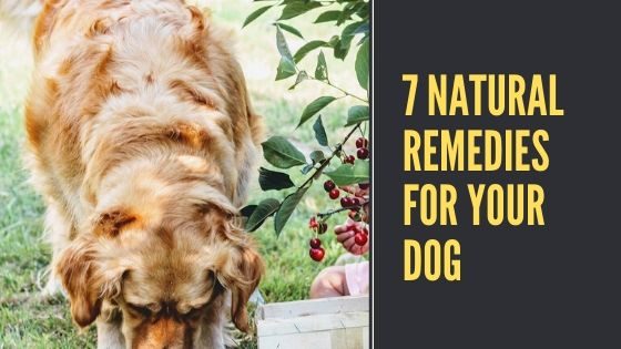 7 Natural Remedies for Your Dog