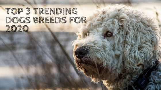 Top 3 Trending Dog Breeds for 2020