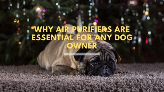 Why Air Purifiers are Essential for Any Dog Owner