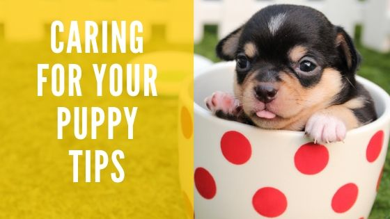 Caring for Your Puppy Tips