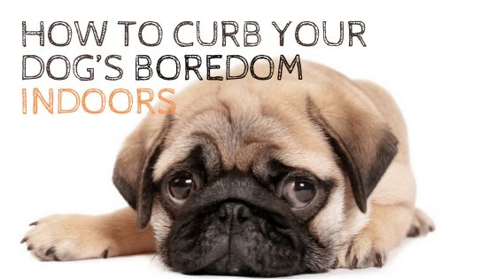 How to Curb Your Dog's Boredom Indoors