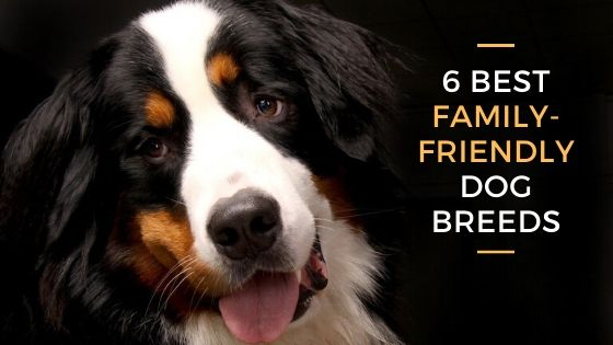 6 Best Dog Breeds for Families & Kids
