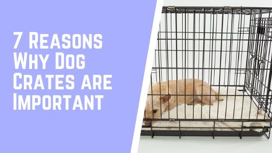 7 Reasons Why Dog Crates are Important