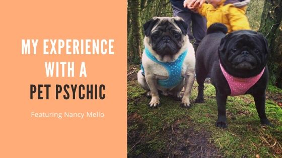 My Experience With an Animal Communicator / Pet Psychic