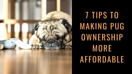 7 Tips to Making Pug Ownership More Affordable