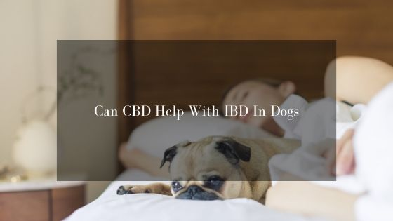 Can CBD Help With IBD For Dogs?