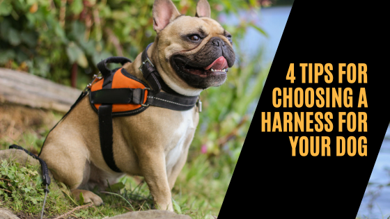 4 Tips For Choosing A Harness For Your Dog