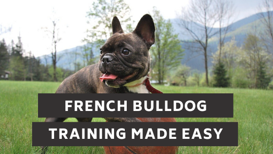 French Bulldog Training Made Easy